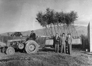 Olio Costa-Lorenzo Costa fu Eugenio-Genova dal 1860-olio extravergine-famiglia costa- la nostra storia-trattore-olio italiano-prodotto italiano-genova-italia