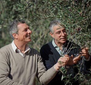 Olio Costa-Lorenzo Costa fu Eugenio-Genova dal 1860-fratelli costa-eugenio-pio-olio extravergine-uliveto-migliore selezione-extravergine di oliva-olio italiano-prodotto italiano-genova-italia